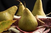 Bosc Pears Themed For Autumn