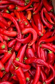 Red, Hot Peppers