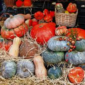 pumpkins on market