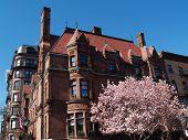 Boston Victorian