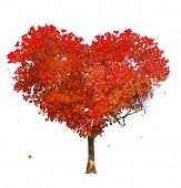 Tree of love on white background