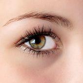 Olho de avelã