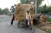 BAIDYAPUR, INDIA - DEC 01 :An unidentified rickshaw rider transports rice from the farm home on Dec