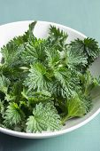 Close up of freshly cut stinging nettles
