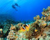 Nemo Fish and couple scuba diving
