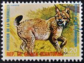 EQUATORIAL GUINEA - CIRCA 1974: Stamp printed in Guinea shows lynx Europe
