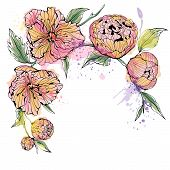 White background with watercolor peony flowers
