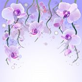 Vector watercolor background with orchids