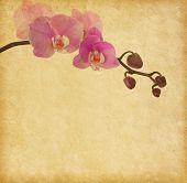 Old  paper with orchid