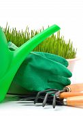 Watering-can, Rake, Pot, Rubber Gloves And Green Grass