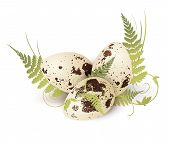 stock photo of quail  - Illustration of Quail Eggs Decorated With Fern Over White - JPG