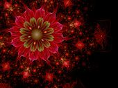 Dark Red And Green Fractal Flower