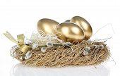 Golden Egg in the Nest