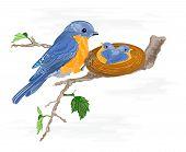 Birdie And Little Birds In The Nest
