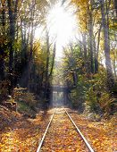 Railway In The Forest In The Sunlight