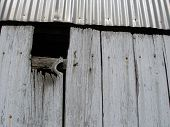 Tin Roof And Door