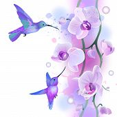 stock photo of hummingbirds  - Vector seamless pattern with gentle violet orchids flowers and hummingbirds - JPG