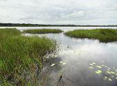 Wetlands Around Coba