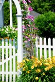 White picket fence and pink clematis at country house