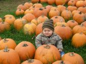 Cute boy with pumpkins