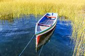 Colorful Boat And Reeds
