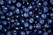 Background blueberries