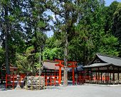 Japan temple at day in forest