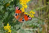 colored butterflies on a blooming plants