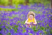 Cute Little Toddler Girl In Bluebell Flowers In Spring