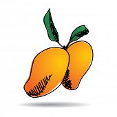 Freehand drawing mango icon - vector eps 10 illustration