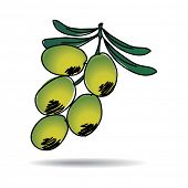 Freehand drawing olive icon - vector eps 10 illustration
