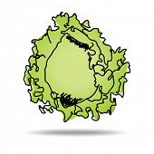 Freehand drawing iceberg lettuce icon - vector eps 10 illustration