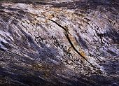 Old Rotten Wood