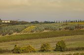Tuscan Landscape With Vineyards