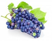 Cluster blue grapes with green leaf. Isolated on white background