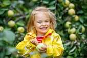 Little girl holding apple in the garden