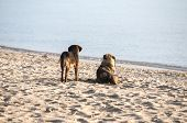 Two dogs on sand beach