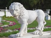 Lion Sculpture Standing