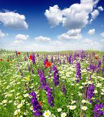 Summer wildflowers