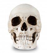 Human skull on white background