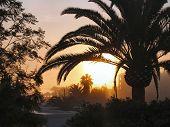 Ibiza sunset through palm trees