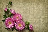 Asters On Canvas Background