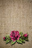 rose on canvas background