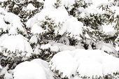 Snow On The Tree