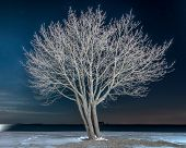 Lone Tree On Snowy Beach At Night