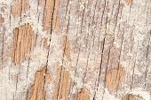 foto of termite  - Soil from termite eaten wood wall old until disintegrated - JPG