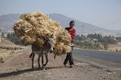 The Boy Transports Hay With A Donkey