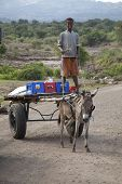 The Boy Transports Drinks With A Donkey
