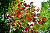 Colorful branches