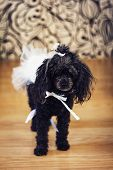 A Dog With A Bow